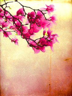 'Tulpen-Magnolie' von Dirk h. Wendt bei artflakes.com als Poster oder Kunstdruck $19.41