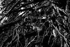Nightmare - Big Bear Lake CA   #school3y #losangeles #BigBear #photography #igers #usa #instagood #art #follow #photographyislife #lds #mormon #ldsphotographer #canon #ldsart #photo #photos #pic #pics #picture #photographer #pictures #snapshot #beautiful #instagood  #photooftheday #photodaily  #photooftheday