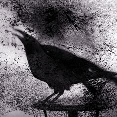 """Keith Carter<br />Raven on Table 