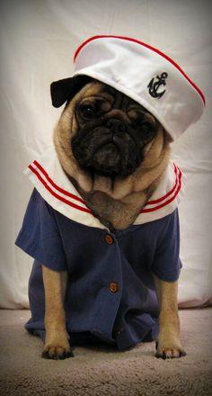 Sailor Pug _ PUGS IN CLOTHES - www.sundayswithfrank.blogspot.com #Pugs #Pug #Dog