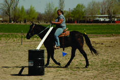 Extreme Trail Horse Obstacles | This horse and rider are doing very well on this obstacle.