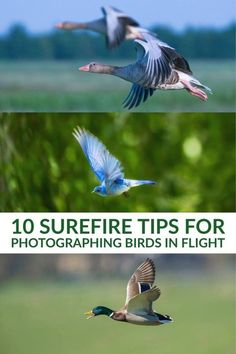 10 Surefire Tips for Photographing Birds in Flight - Photography, Landscape photography, Photography tips Wildlife Photography Tips, Dslr Photography Tips, Photography Lessons, Photoshop Photography, Photography Tutorials, Digital Photography, Nature Photography, Landscape Photography, Artistic Photography