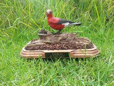 Hawaiian (Kauai) Bird called APAPANE