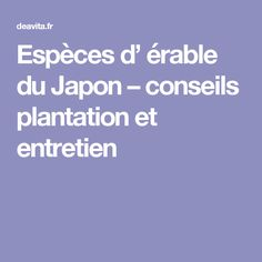 Érable du Japon - Acer palmatum Atropurpureum  Pièces de monnaie ...