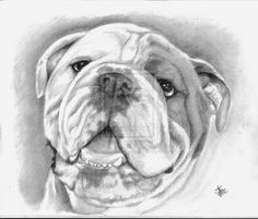 Steeler by ~winstonscreator on deviantART dibujo de, de animal, pencil sketch, graphit pencil