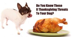 Warren Eckstein – The Pet Show: Home of dog – cat vitamins – supplements Thanksgiving Recipes, Holiday Recipes, Thanksgiving Wishes, Toxic Foods For Dogs, Cooking Shows On Netflix, Cat Vitamins, Food Alert, Cooking Beets, Can Dogs Eat