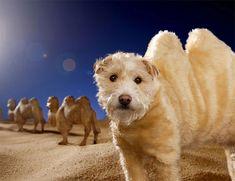 Cada Navidad, este fotógrafo convierte a su perro en distintos animales