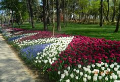 Emirgan Grove's Tulips