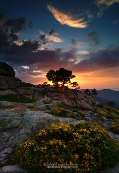 ~~Fantasy Garden ~ blazing late spring sunset over the high gardens in Guadarrama National Park, Spain by BuenaLuz~~