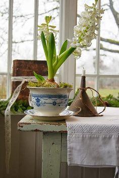 Adeus Inverno, Bem Vinda A Primavera!por Depósito Santa Mariah