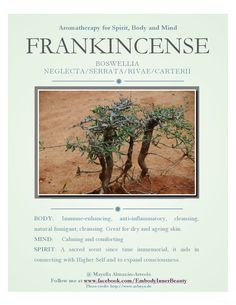 Frankincense for body, mind and spirit  www.facebook.com/EmbodyInnerBeauty Aromatherapy, Cleanse, Essential Oils, Spirit, Mindfulness, Facebook, Nature, Naturaleza, Nature Illustration