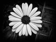 Black, white flowers