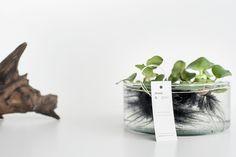 Tuba 5:  Hiacynt pływający (Eichhornia crassipes) glass tube, home garden, water plant, nature, hyacinth, jacinth / more on https://www.facebook.com/mchyporosty.news
