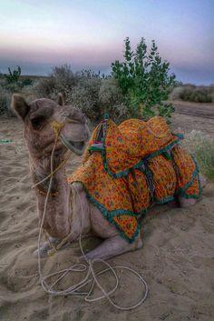 Love the color . Thar Desert