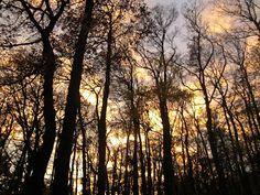 wonderful sky About Me Blog, Sky, Plants, Heaven, Flora, Plant, Planting