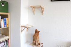 DIY Catwalk Katzentreppe