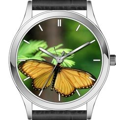 Butterfly watch series - Yellow Coster