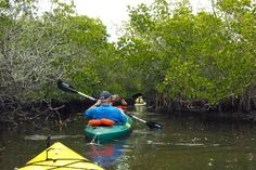 Kayak on the Waterways The Intracoastal Waterway and any of Wilmington's numerous creeks are perfect for a day trip in a boat with a paddle. Expect to see fish, turtles, birds of all sorts and the most amazing sunsets.