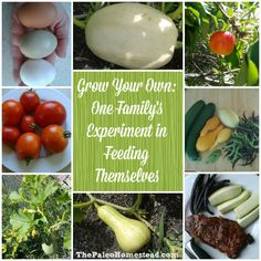 Grow Your Own: One Family's Experiment in Feeding Themselves