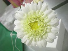"""sugar flower """"Gerbera"""" by rosey sugar, via Flickr"""