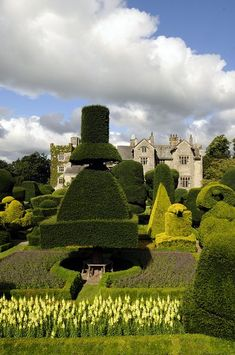 Levens Hall in Cumbria where you'll find some of the oldest topiary in the UK.