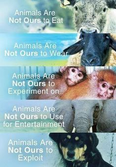 * ANIMALS ARE NOT OURS TO EXPLOT: Freedom is a born right. You have no right over an animals body in the same way you have no right over a humans body. You are not above them. We are ALL earthlings.