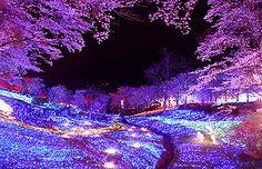 「夜桜とイルミネーションの出会い*春もまた、相模湖イルミリオンへ」