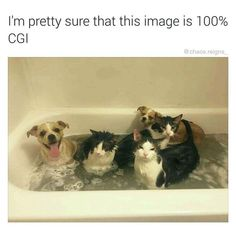Animal Pictures Meme Dump Of The Day - 18