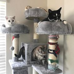 "3,741 curtidas, 17 comentários - nala_cat™ (@nala_cat) no Instagram: ""The squad @white_coffee_cat_ @hello_luna_rose @stella_and_steve ❤️ #kittymansions  use coupon code…"""