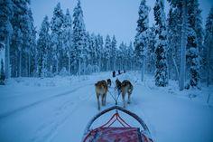 Unforgettable Winter Adventures in Swedish Lapland
