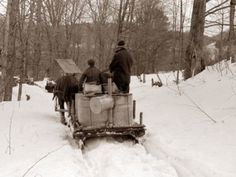 Hired man and son of Frank H. Shurtleff returning to sugar house with vat of maple sap to be boiled down into maple syrup. The Shurtleff farm has about 400 acres and was originally purchased by grandfather in He raises sheep, cows, cuts lumber and ha Best Maple Syrup, Pure Maple Syrup, Love Pictures, Vintage Pictures, Sugaring, New England Style, Le Havre, Places Of Interest, Out Of This World