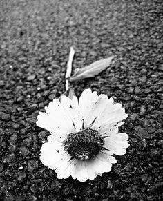 Flower 2 by Jasmine Kelly