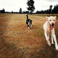 Off leash fun at Fort Steilacoom Dog Park - Lakewood, WA - Angus Off-Leash #dogs #puppies #cutedogs #dogparks #lakewood #washington