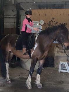 Horsing around at Wake Field Equestrian Stud