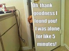 Omg.....this so like my dog Davis. Always anxious when I'm nowhere in sight for 5 min.