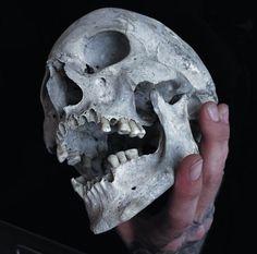Skull Reference, Drawing Reference Poses, Anatomy Reference, Skull Anatomy, Skeleton Anatomy, Tattoo Caveira, Totenkopf Tattoos, Bild Tattoos, Arte Obscura