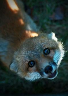 """littlepawz: """"I'm ready for my close-up!"""" Curious little forest creature + a very patient nature photographer = magic!"""