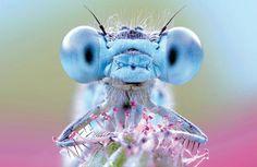 Lo spettacolo della natura in dieci scatti www.lastampa.it