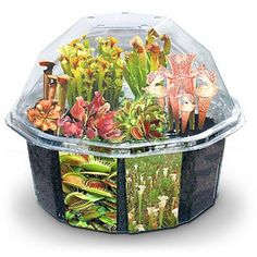 Little Desktop Of Horrors...  Kit lets you grow a garden of carnivorous plants  Seeds from over 10 varieties of meat-eating flora  Personalize with decals, rocks, and bog buddies