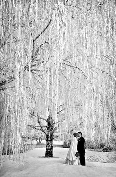 Gorgeous winter wedding bridal portrait by PMG Image in the HuffPost Weddings article http://www.huffingtonpost.com/2014/03/03/winter-wedding-photos_n_4875180.html?ref=topbar
