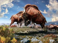 Ice age bison are not to be messed with