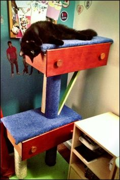 Why buy an expensive cat tree from the store when you can easily build one for a song? Why, you can use old drawers to make your DIY cat tree!