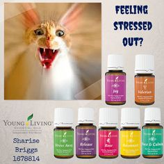 Feeling  stressed out? Sharise Briggs 1678814