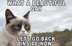 The 50 Funniest Grumpy Cat Memes | Complex