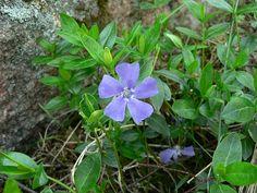 Pikkutalvio Shrubs, Perennials, Garden Ideas, Trees, Gardening, Flowers, Plants, Tree Structure, Lawn And Garden