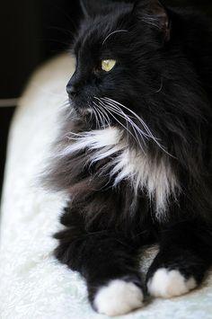 Leonardo DiCatio  cat
