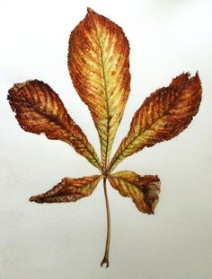 Dianne Sutherland: Thinking About Leaves, more on Vellum