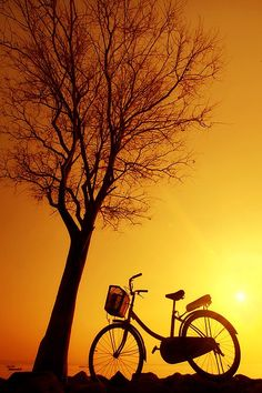 Bicycle and Tree Silhouette in the Sunset Nature Pictures, Beautiful Pictures, Cycle Painting, Licht Box, Sunset Silhouette, Tree Silhouette, Expressions Photography, Silhouette Photography, Bicycle Art