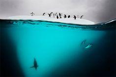 Photographer David Doubilet photography