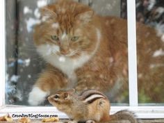 Ok Squirrel, you out run me one time and you go out and get a racing stripe? Opportunity Knocks, Looking Out The Window, Racing Stripes, Cat Love, Funny Photos, Squirrel, Dog Cat, Kittens, Cute Animals